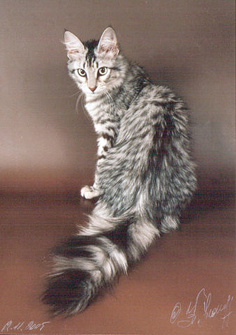 Kitty cats in my life: Tabby - Grey - Stacey - Medium ...